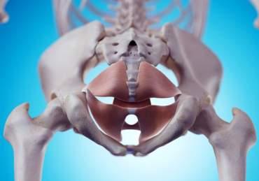 Der PC-Muskel ist Teil der Beckenbodenmuskulatur.